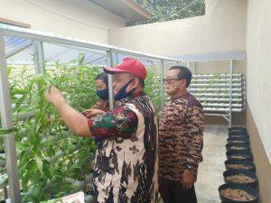 Kak Zainuri Panen Perdana Tanaman Sayuran Hidroponik di Kwarda Lampung